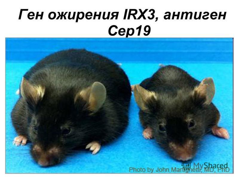 Ген ожирения IRX3, антиген Cep19