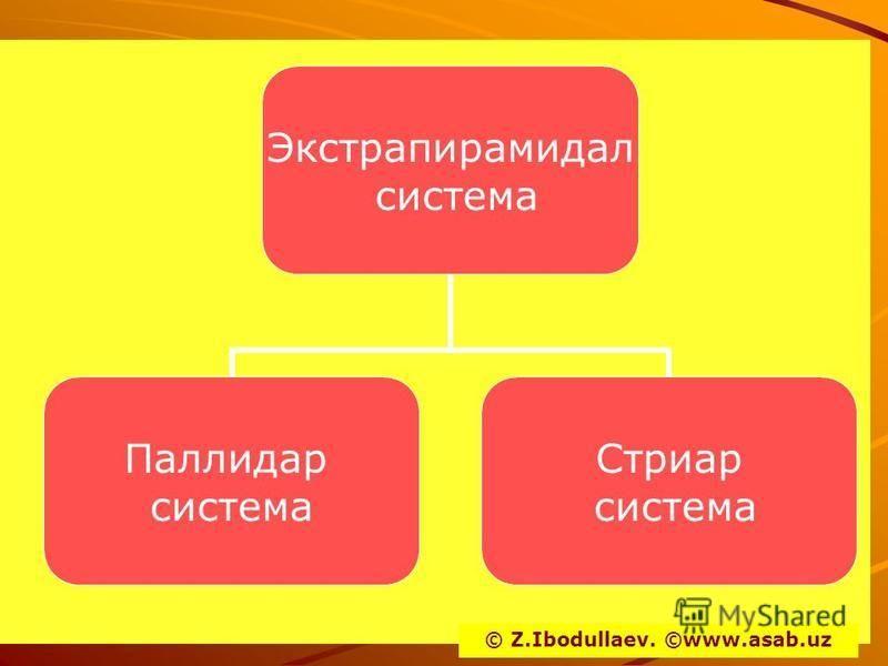 Экстрапирамидал система Паллидар система Стриар система © Z.Ibodullaev. ©www.asab.uz