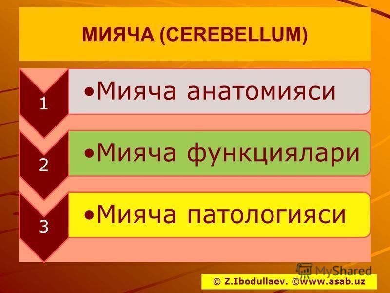 МИЯЧА (CEREBELLUM) 1 Мияча анатомиаси 2 Мияча функциялари 3 Мияча патологиями © Z.Ibodullaev. ©www.asab.uz