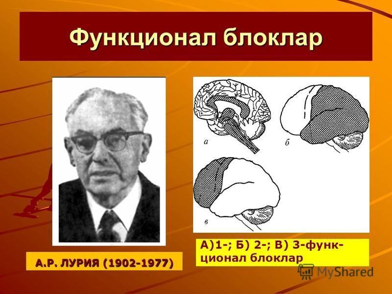Функционал блоклар А.Р. ЛУРИЯ (1902-1977) А)1-; Б) 2-; В) 3-функ- ционал блоклар
