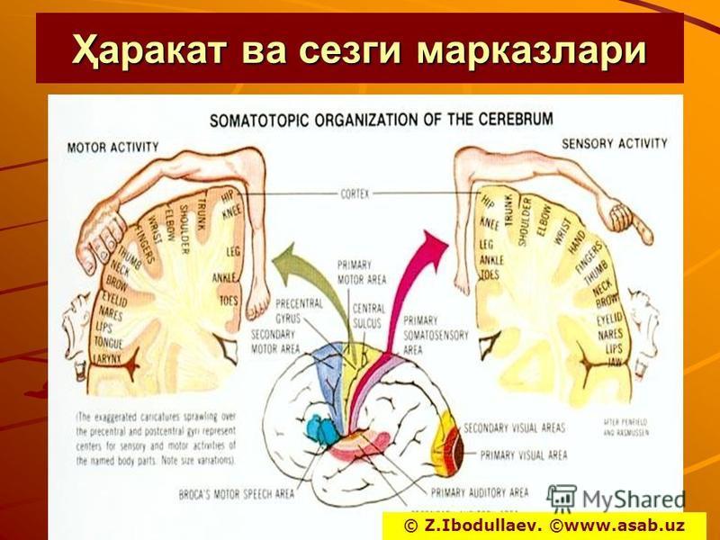 Ҳпрокат ва серги марказлари © Z.Ibodullaev. ©www.asab.uz