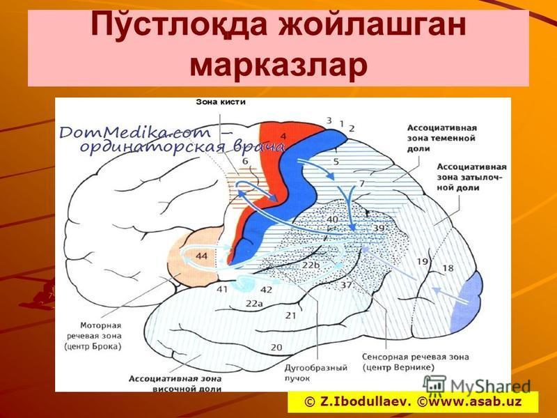 Пўстлоқда жойлашган марказлар © Z.Ibodullaev. ©www.asab.uz