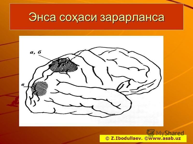 Энса соҳаси зарарланса © Z.Ibodullaev. ©www.asab.uz