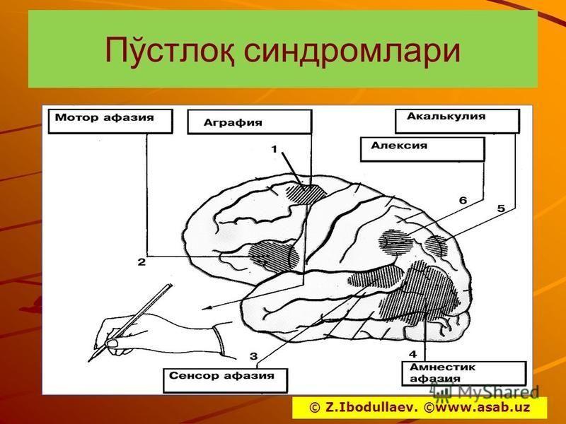 Пўстлоқ синдром лари © Z.Ibodullaev. ©www.asab.uz