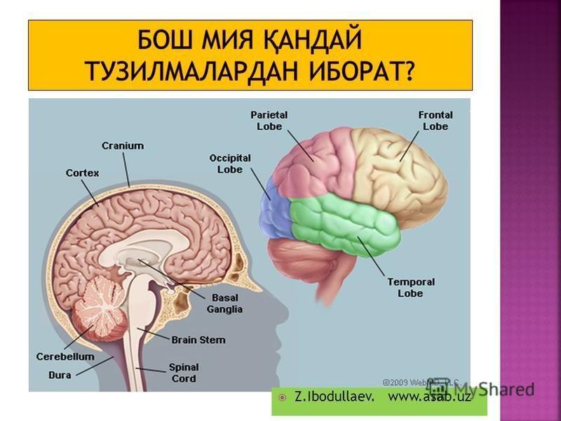 Z.Ibodullaev. www.asab.uz