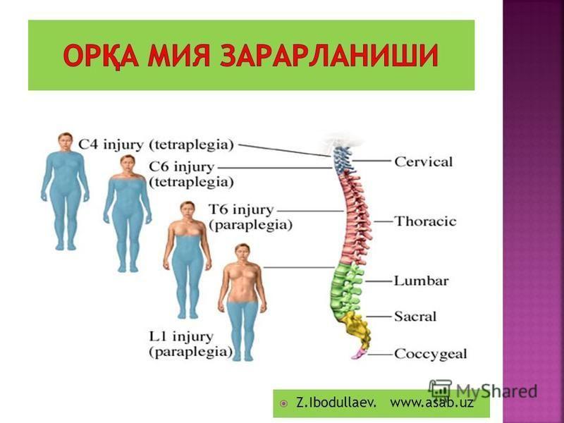 одам анатомияси ва физиологияси китоби