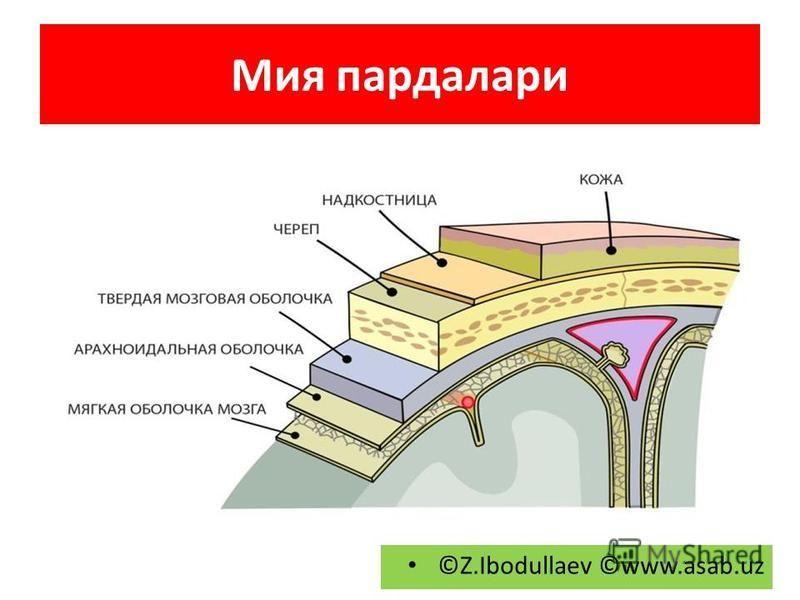 Мия пардалари ©Z.Ibodullaev ©www.asab.uz