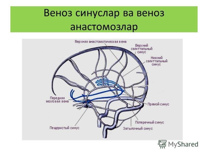 Веноз синус ларва веноз анастомозлар
