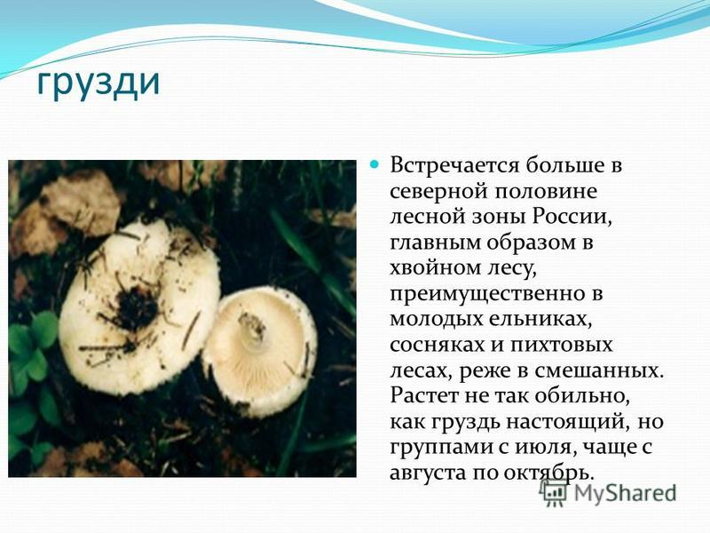 грузди Встречается больше в северной половине лесной зоны России, главным образом в хвойном лесу, преимущественно в молодых ельниках, сосняках и пихтовых лесах, реже в смешанных. Растет не так обильно, как груздь настоящий, но группами с июля, чаще с