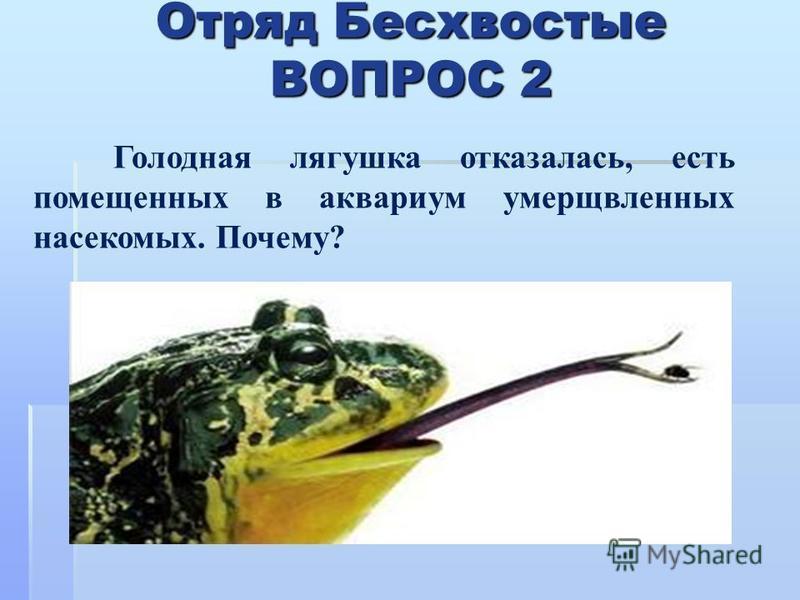 Отряд Бесхвостые ВОПРОС 2 Голодная лягушкаа отказалась, есть помещенных в аквариум умерщвленных насекомых. Почему?