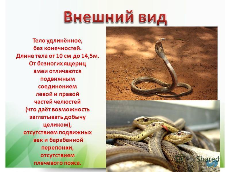 Тело удлинённое, без конечностей. Длина тела от 10 см до 14,5 м. От безногих ящериц змеи отличаются подвижным соединением левой и правой частей челюстей (что даёт возможность заглатывать добычу целиком), отсутствием подвижных век и барабанной перепон