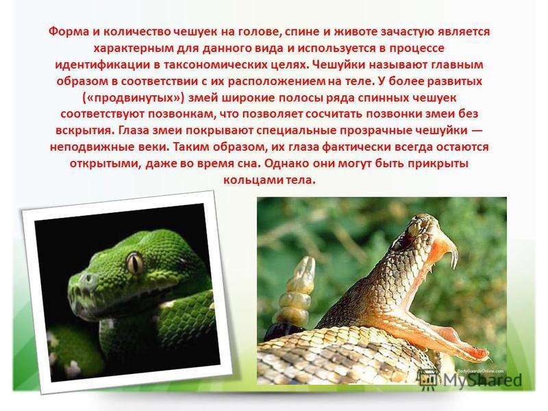 Форма и количество чешуек на голове, спине и животе зачастую является характерным для данного вида и используется в процессе идентификации в таксономических целях. Чешуйки называют главным образом в соответствии с их расположением на теле. У более ра