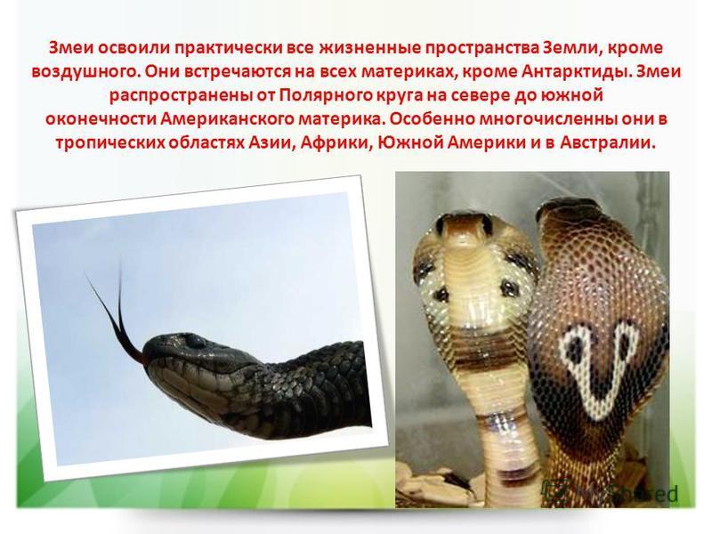 Змеи освоили практически все жизненные пространства Земли, кроме воздушного. Они встречаются на всех материках, кроме Антарктиды. Змеи распространены от Полярного круга на севере до южной оконечности Американского материка. Особенно многочисленны они