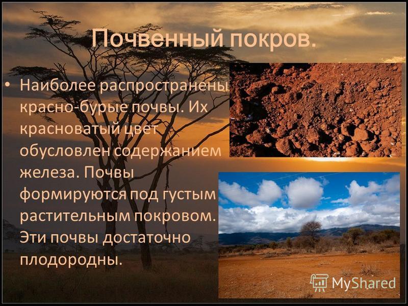 Почвенный покров. Наиболее распространены красно-бурые почвы. Их красноватый цвет обусловлен содержанием железа. Почвы формируются под густым растительным покровом. Эти почвы достаточно плодородны.