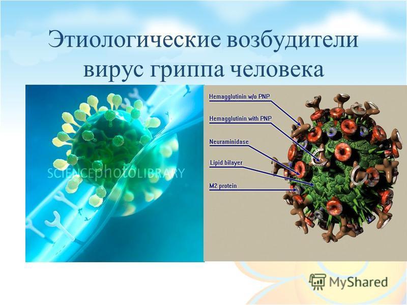 Этиологические возбудители вирус гриппа человека