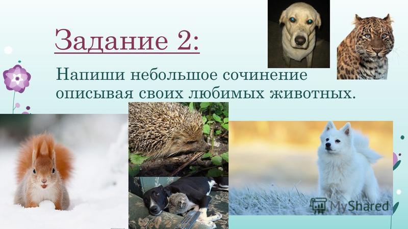 Задание 2: Напиши небольшое сочинение описывая своих любимых животных.