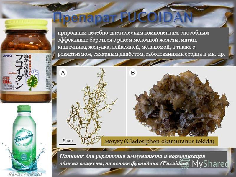 мозуку (Cladosiphon okamuranus tokida) природным лечебно - диетическим компонентам, способным эффективно бороться с раком молочной железы, матки, кишечника, желудка, лейкемией, меланомой, а также с ревматизмом, сахарным диабетом, заболеваниями сердца