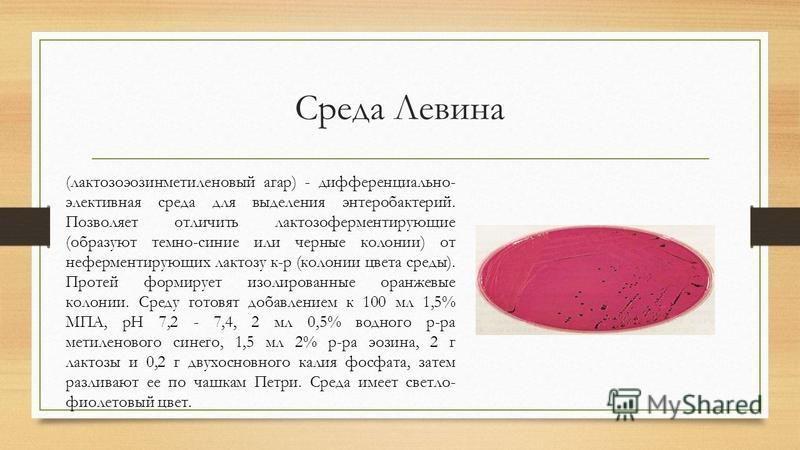 Среда Левина (лактозоэозинметиленовый агар) - дифференциально- элективная среда для выделения энтеробактерий. Позволяет отличить лактозоферментирулющие (образуют темно-синие или черные колонии) от неферментирулющих лактозу к-р (колонии цвета среды).