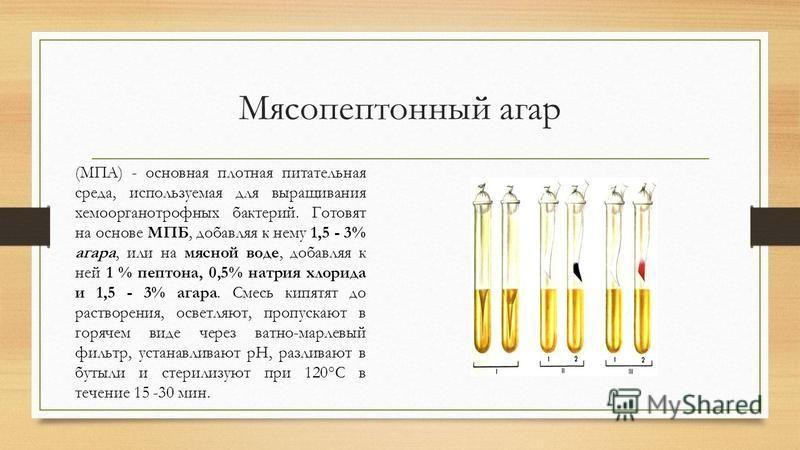 Мясопептонный агар (МПА) - основная плотная питательная среда, используемая для выращивания хемоорганотрофных бактерий. Готовят на основе МПБ, добавляя к нему 1,5 - 3% агара, или на мясной воде, добавляя к ней 1 % пептона, 0,5% натрия хлорида и 1,5 -