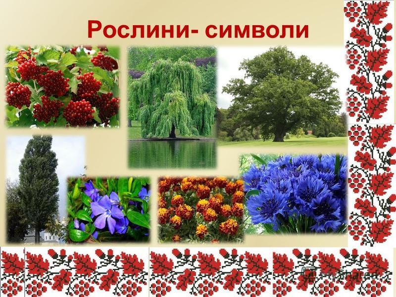 Без верби й калини нема України