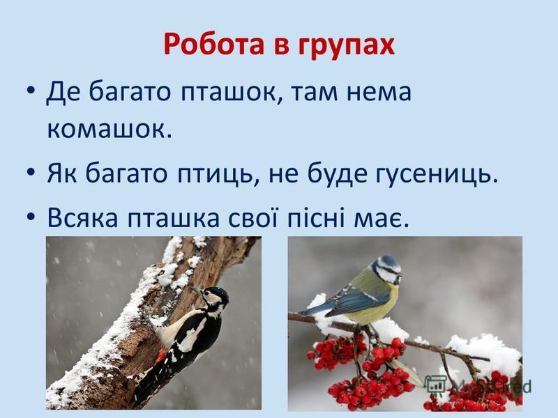 Робота в групах Де багато пташок, там нема комашок. Як багато птиць, не буде гусениць. Всяка пташка свої пісні має.