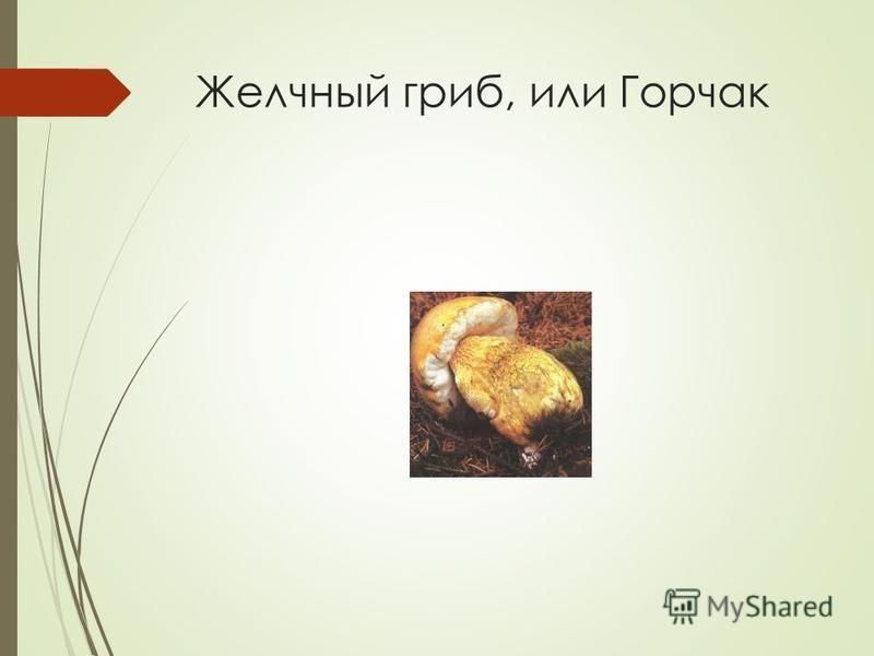Желчный гриб, или Горчак