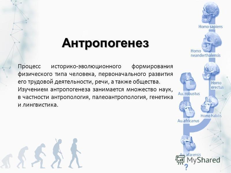 Антропогенез Процесс историко-эволюционного формирования физического типа человека, первоначального развития его трудовой деятельности, речи, а также общества. Изучением антропогенеза занимается множество наук, в частности антропология, палеоантропол