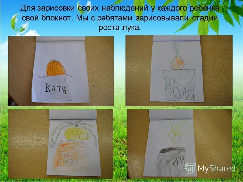 Для зарисовки своих наблюдений у каждого ребёнка свой блокнот. Мы с ребятами зарисовывали стадии роста лука.