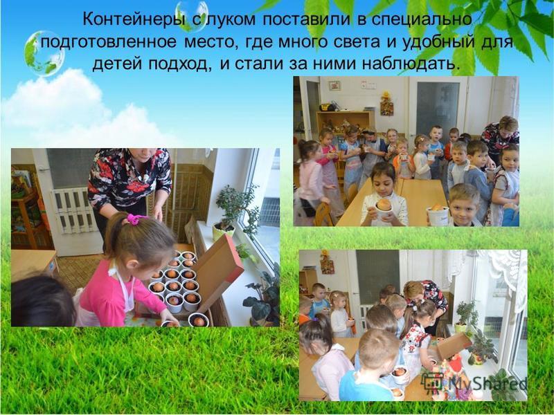 Контейнеры с луком поставили в специально подготовленное место, где много света и удобный для детей подход, и стали за ними наблюдать.