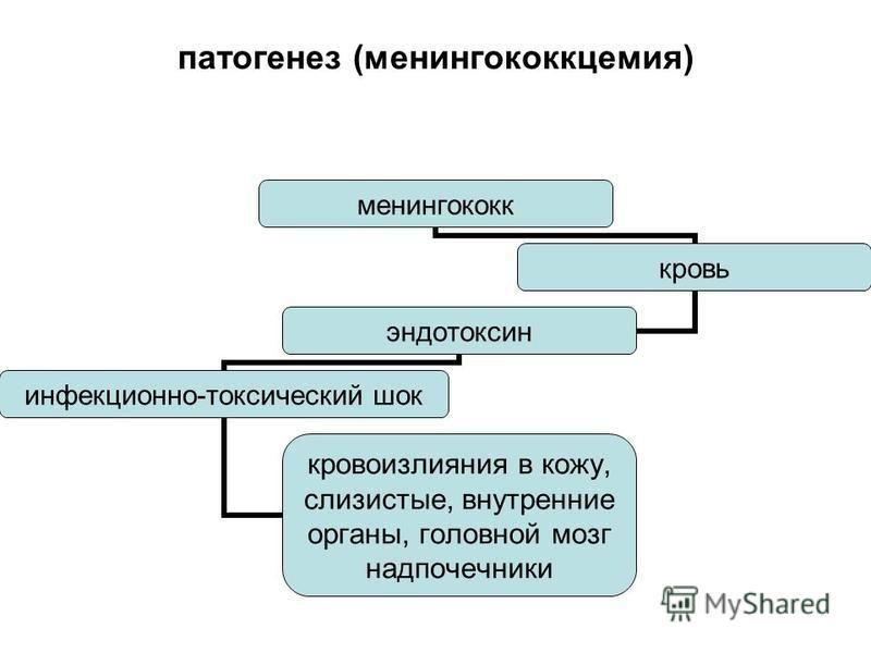 патогенез (менингококцемия) менингококк кровь эндотоксин инфекционно- токсический шок кровоизлияния в кожу, слизистые, внутренние органы, головной мозг надпочечники