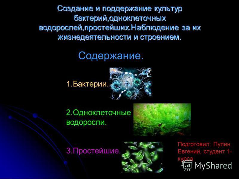 Создание и поддержание культур бактерий,одноклеточных водорослей,простейших.Наблюдение за их жизнедеятельности и строением. Подготовил: Пупин Евгений, студент 1- курса Содержание. 1.Бактерии. 2. Одноклеточные водоросли. 3.Простейшие.