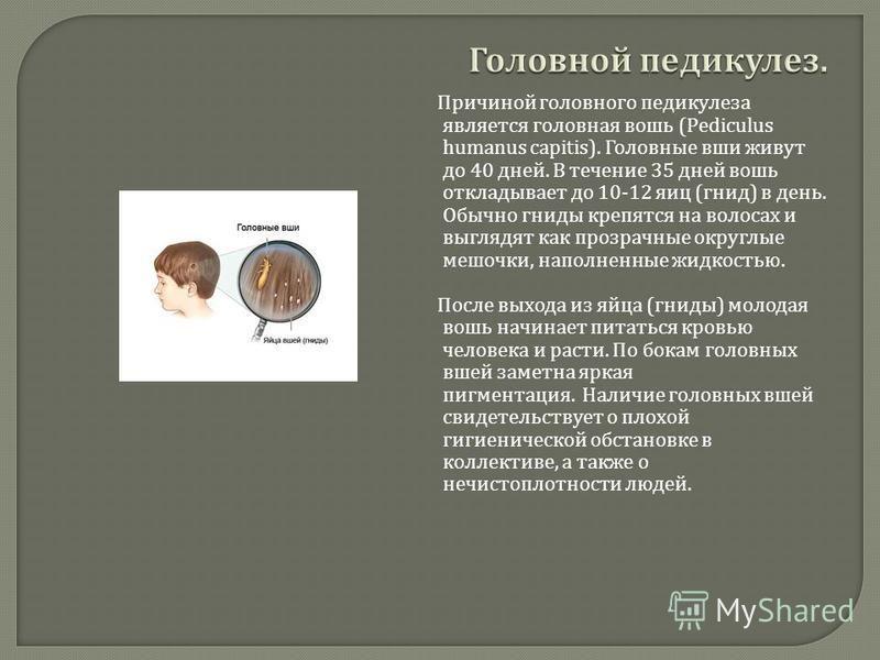 Причиной головного педикулеза является головная вошь (Pediculus humanus capitis). Головные вши живут до 40 дней. В течение 35 дней вошь откладывает до 10-12 яиц ( гнид ) в день. Обычно гниды крепятся на волосах и выглядят как прозрачные округлые мешо