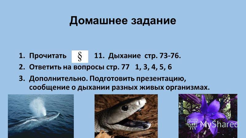 Домашнее задание 1. Прочитать 11. Дыхание стр. 73-76. 2. Ответить на вопросы стр. 77 1, 3, 4, 5, 6 3.Дополнительно. Подготовить презентацию, сообщение о дыхании разных живых организмах.