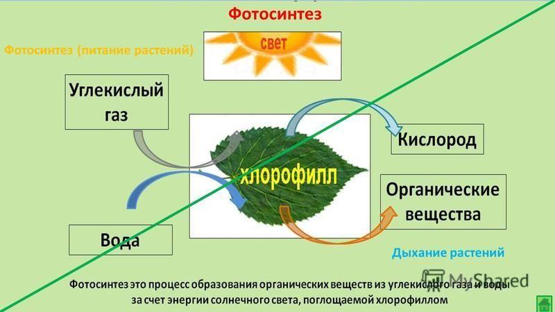 Фотосинтез (питание растений) Дыхание растений Фотосинтез