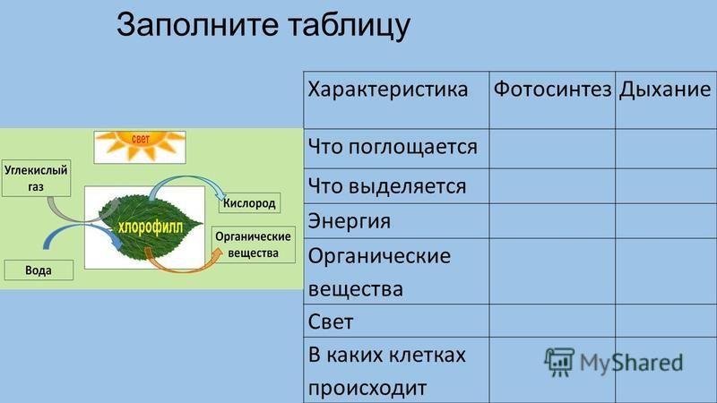 Заполните таблицу Характеристика ФотосинтезДыхание Что поглощается Что выделяется Энергия Органические вещества Свет В каких клетках происходит