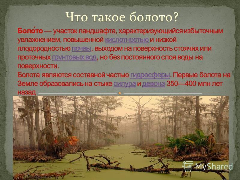 Что такое болото?