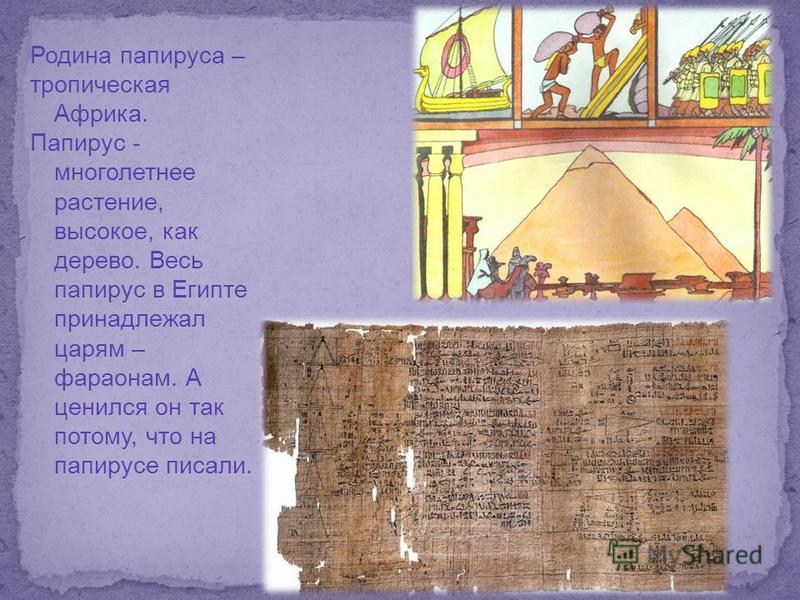 Родина папируса – тропическая Африка. Папирус - многолетнее растение, высокое, как дерево. Весь папирус в Египте принадлежал царям – фараонам. А ценился он так потому, что на папирусе писали.