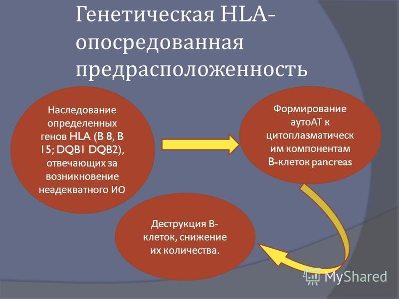 Генетическая HLA- опосредованная предрасположенность Наследование определенных генов HLA (B 8, B 15; DQB1 DQB2), отвечающих за возникновение неадекватного ИО Формирование аутоАТ к цитоплазматической им компонентам B- клеток pancreas Деструкция В - кл