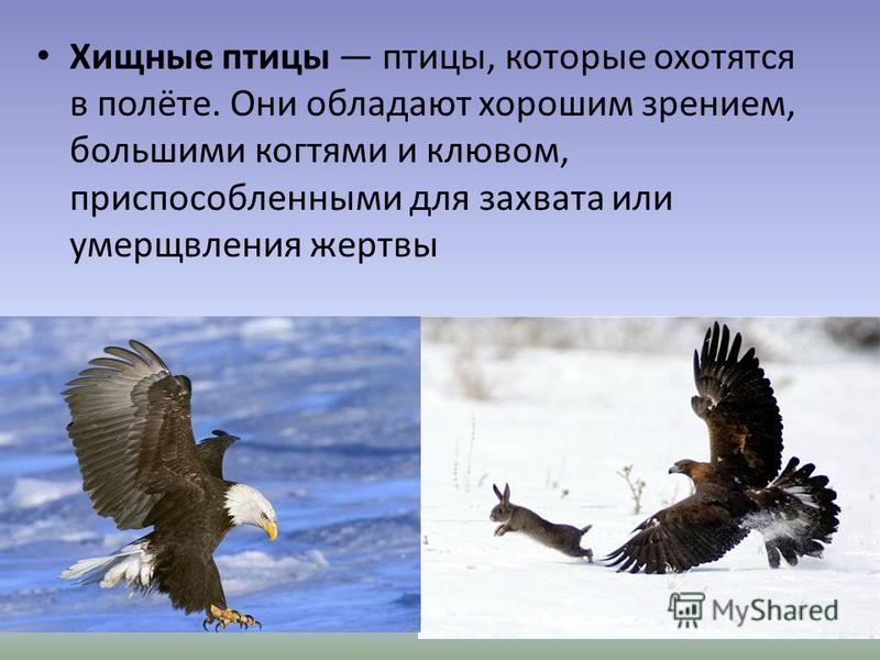 Хищные птицы птицы, которые охотятся в полёте. Они обладают хорошим зрением, большими когтями и клювом, приспособленными для захвата или умерщвления жертвы