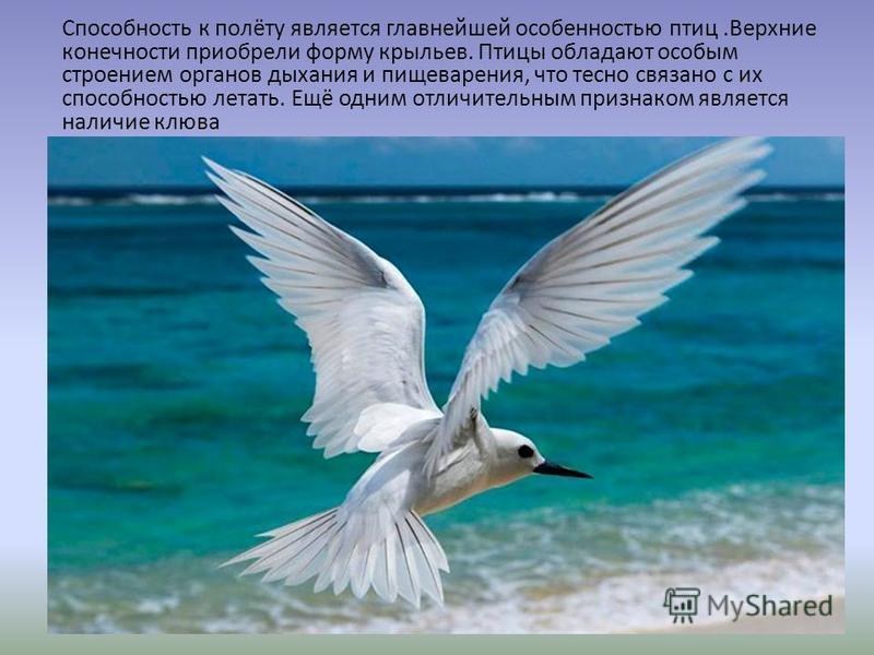 Способность к полёту является главнейшей особенностью птиц.Верхние конечности приобрели форму крыльев. Птицы обладают особым строением органов дыхания и пищеварения, что тесно связано с их способностью летать. Ещё одним отличительным признаком являет