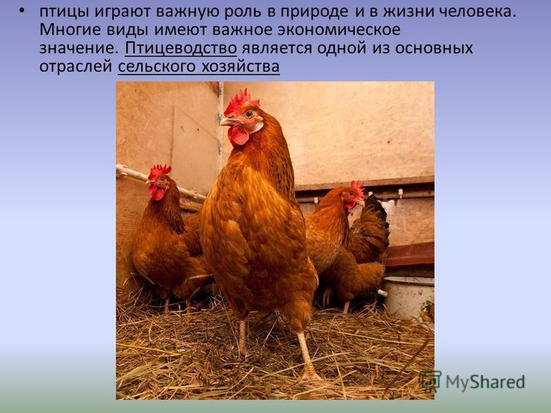 птицы играют важную роль в природе и в жизни человека. Многие виды имеют важное экономическое значение. Птицеводство является одной из основных отраслей сельского хозяйства