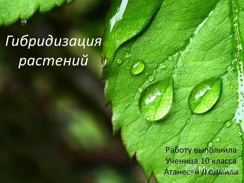 Гибридизация растений Работу выполнила Ученица 10 класса Атанесян Людмила