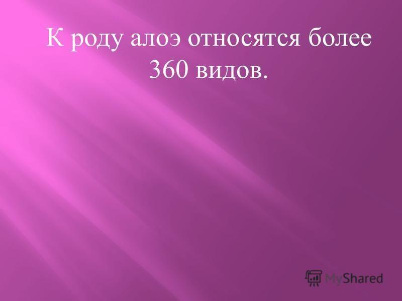 К роду алоэ относятся более 360 видов.