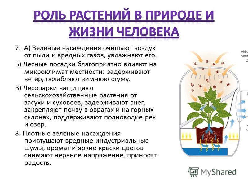 7. А) Зеленые насаждения очищают воздух от пыли и вредных газов, увлажняют его. Б) Лесные посадки благоприятно влияют на микроклимат местности: задерживают ветер, ослабляют зимнюю стужу. В) Лесопарки защищают сельскохозяйственные растения от засухи и