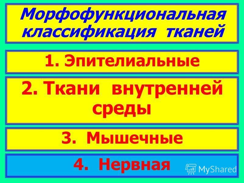 Морфофункциональная классификация тканей 2. Ткани внутренней среды 3. Мышечные 1. Эпителиальные 4. Нервная