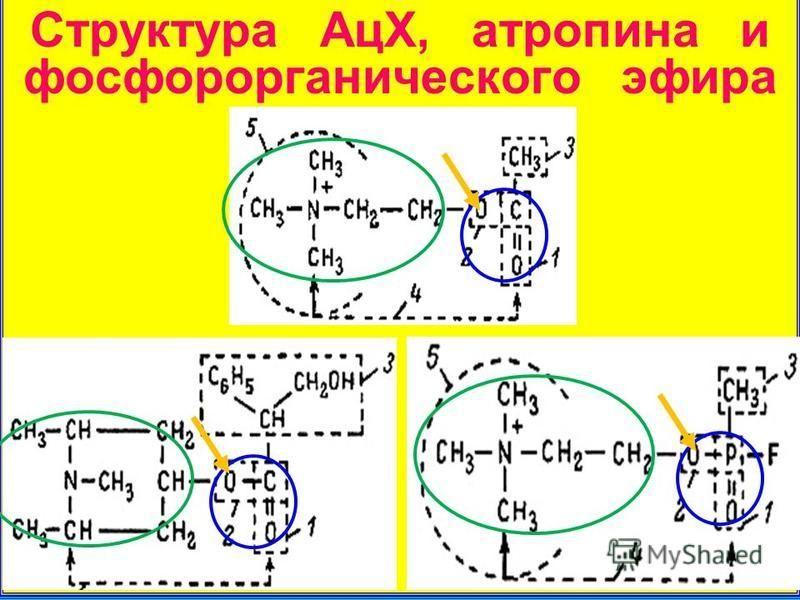 Структура АцХ, атропина и фосфорорганического эфира
