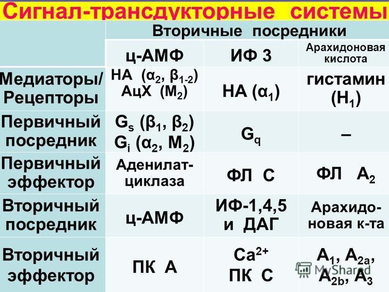 Вторичные посредники ц-АМФИФ 3 Арахидоновая кислота Медиаторы/ Рецепторы НА (α 2, β 1-2 ) АцХ (М 2 ) НА (α 1 ) гистамин (Н 1 ) Первичный посредник G s (β 1, β 2 ) G i (α 2, М 2 ) GqGq – Первичный эффектор Аденилат- циклаза ФЛ С ФЛ А 2 Вторичный посре