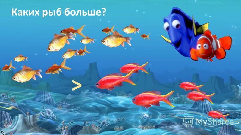 ˃ Каких рыб больше?