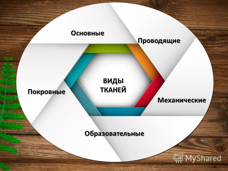 Образовательные Покровные Основные Проводящие Механические ВИДЫТКАНЕЙ