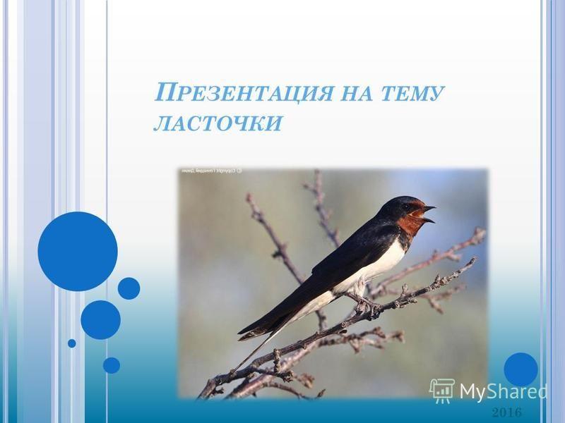 П РЕЗЕНТАЦИЯ НА ТЕМУ ЛАСТОЧКИ 2016
